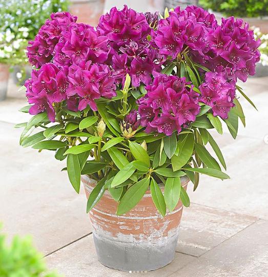 12 популярных растений для дома и сада, которые несут в себе скрытую угрозу