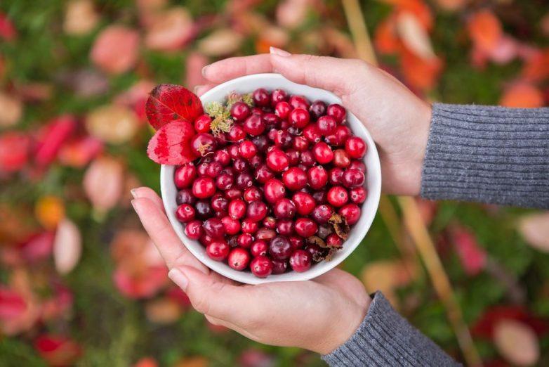 Укрепляющие иммунитет осенние ягоды