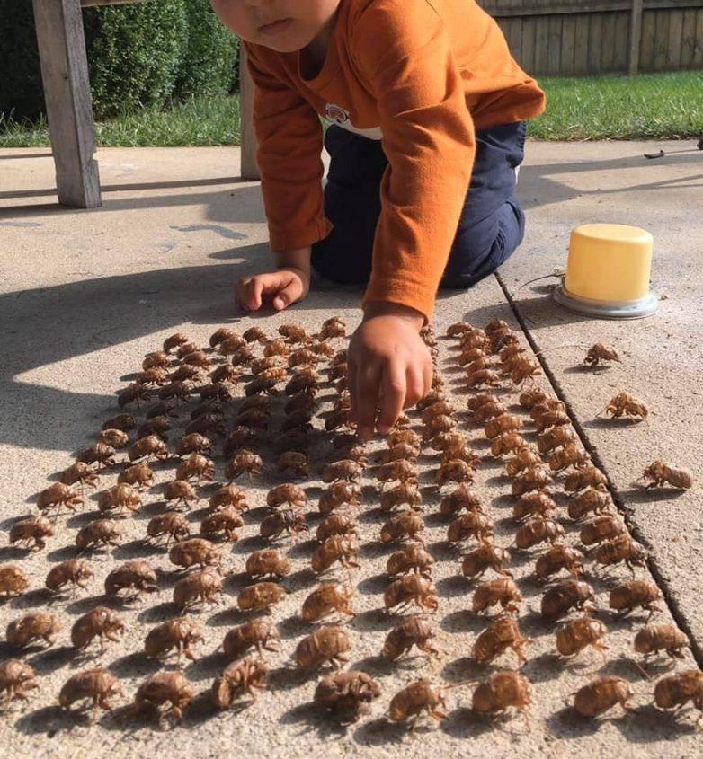 18 ужасных снимков, которые вызывают на спине стадо мурашек