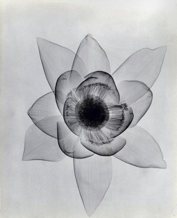Крайне необычные рентгеновские снимки