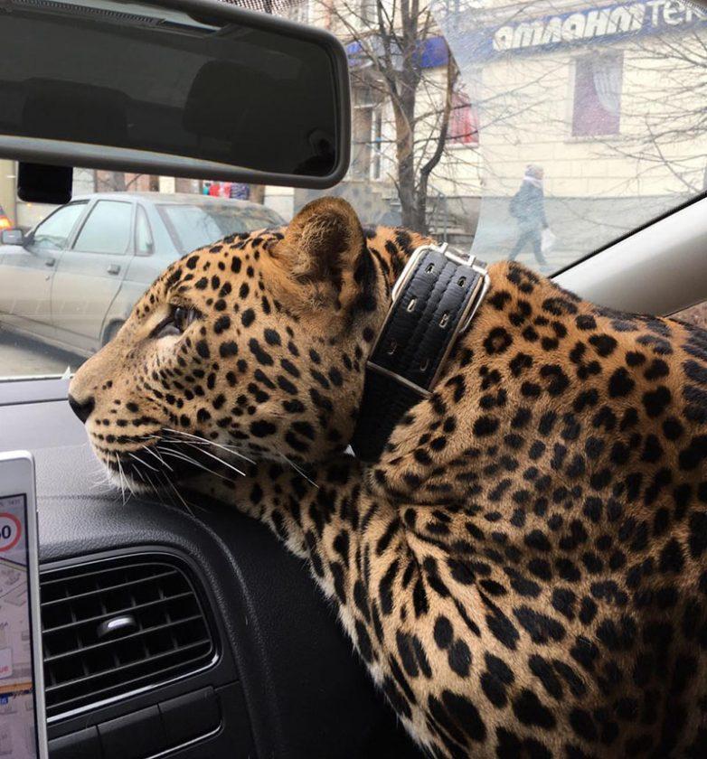 17 забавных случаев в такси, которые вам точно понравятся