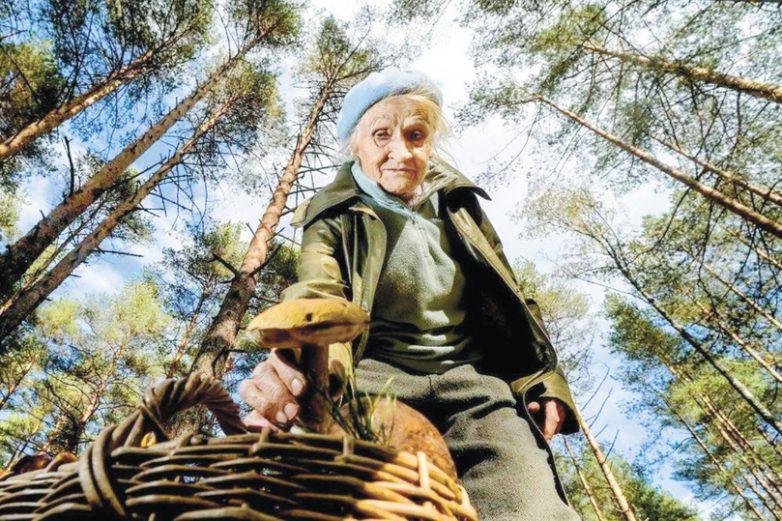 Уголовка за грибы: в России ужесточили правила сбора грибов и берёзового сока