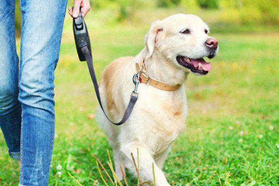За что владельцы собак могут получить штраф?