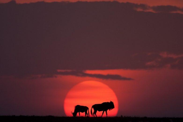 Неповторимые африканские закаты