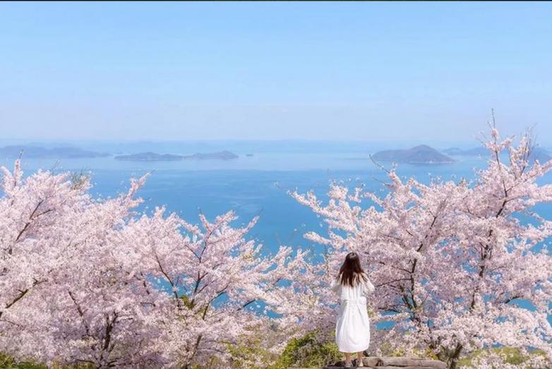 Сакура в Японии зацвела в рекордно ранние сроки
