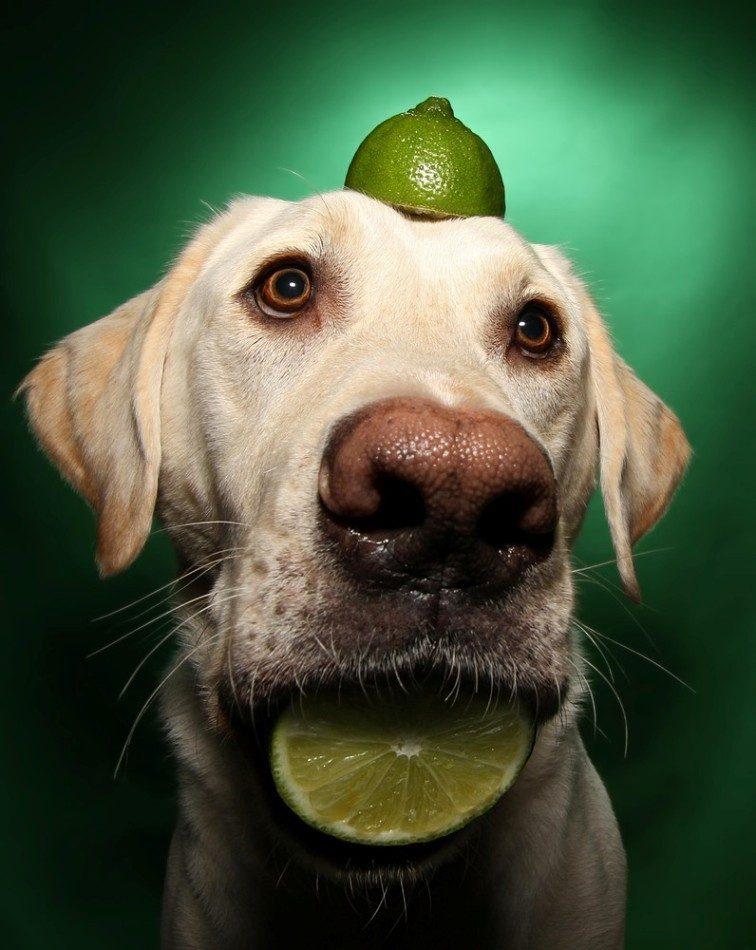 Картинка собаки прикола