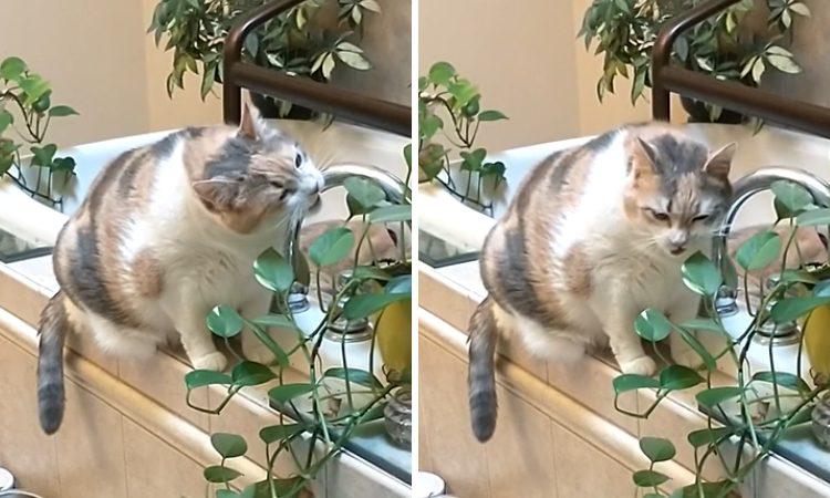 Владельцы этой кошки запретили ей жевать растения, и она нашла компромисс