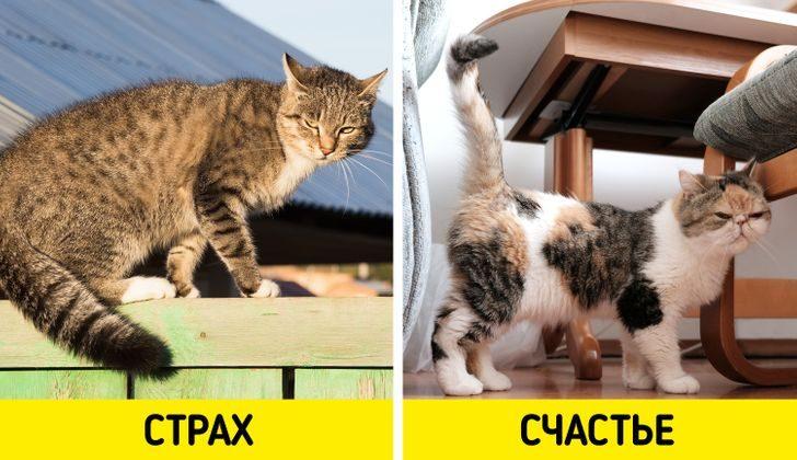 Признаки, по которым легко определить, что ваш кот — самое счастливое создание на земле