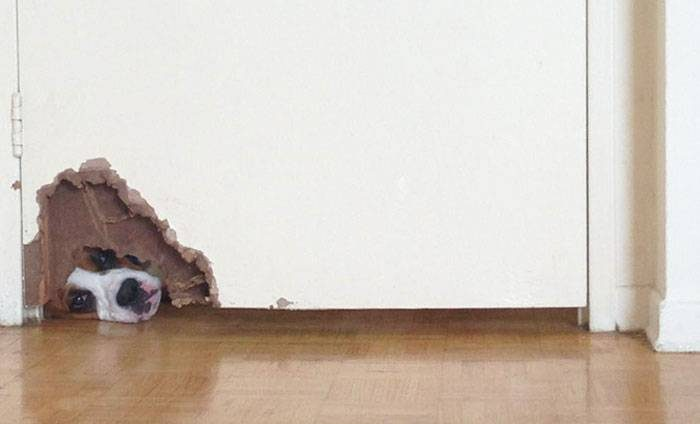 15 зверушек, чье любопытство не знает ни границ, ни приличий