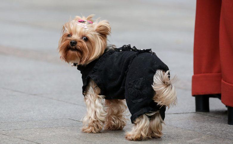 Законопроект о регистрации домашних животных