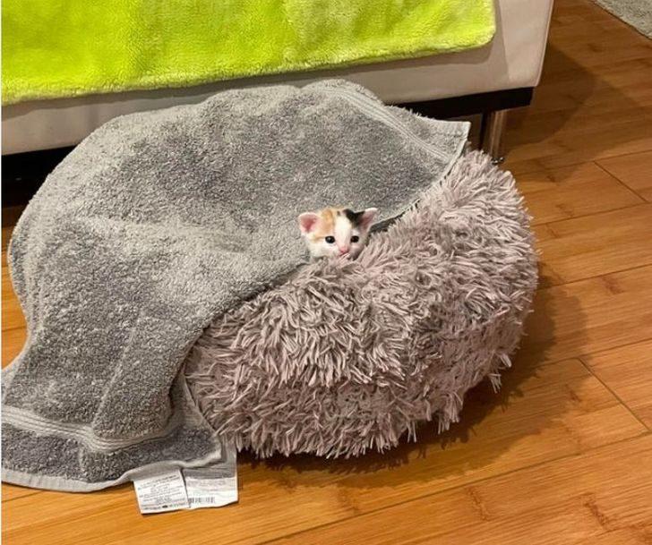 Снимки котят, способные растопить сердце даже Волан-де-Морта