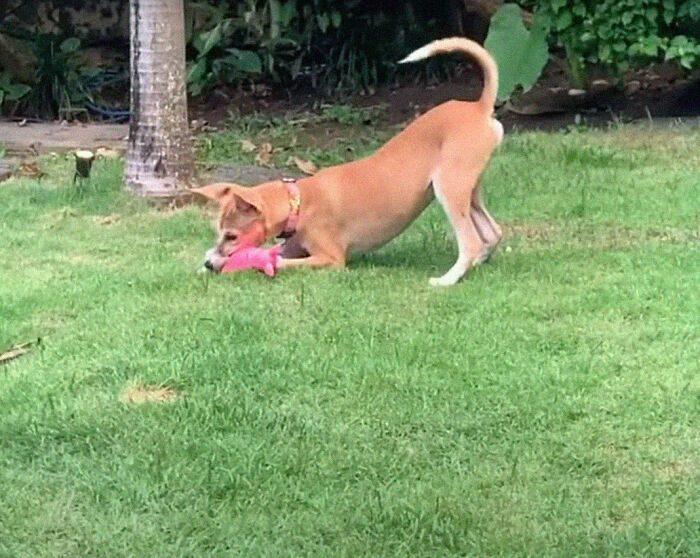 Собака чудом сбежала от торговцев собачьим мясом