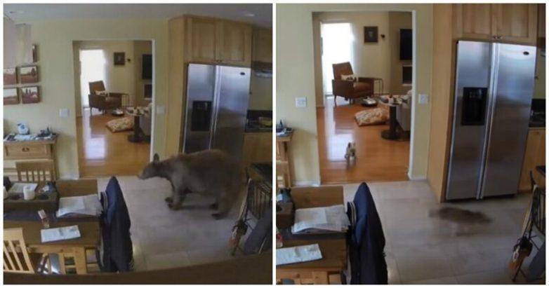 Смелые собаки прогнали забравшегося в дом хозяев медведя