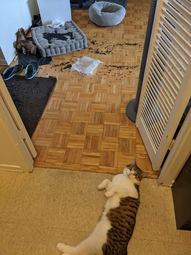 Коты-анархисты, которые вели себя плохо, и это наверняка сошло им с пушистых лап