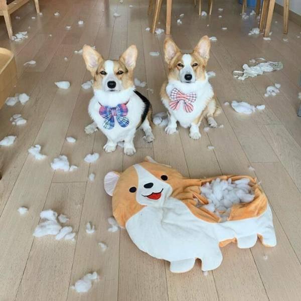 Забавные пёсели для вашего хорошего настроения