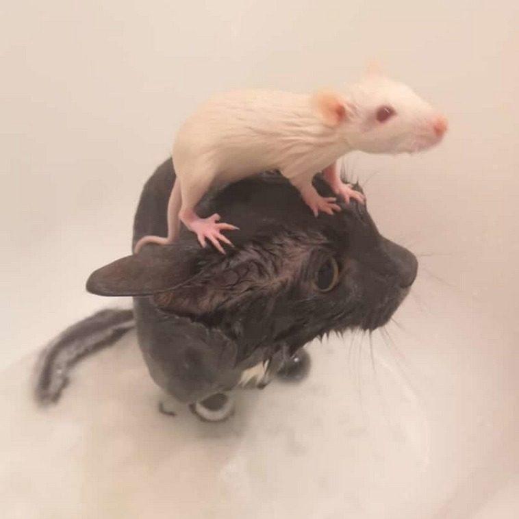 Такие разные домашние животные, которых объединяет одно: их недавно выкупали