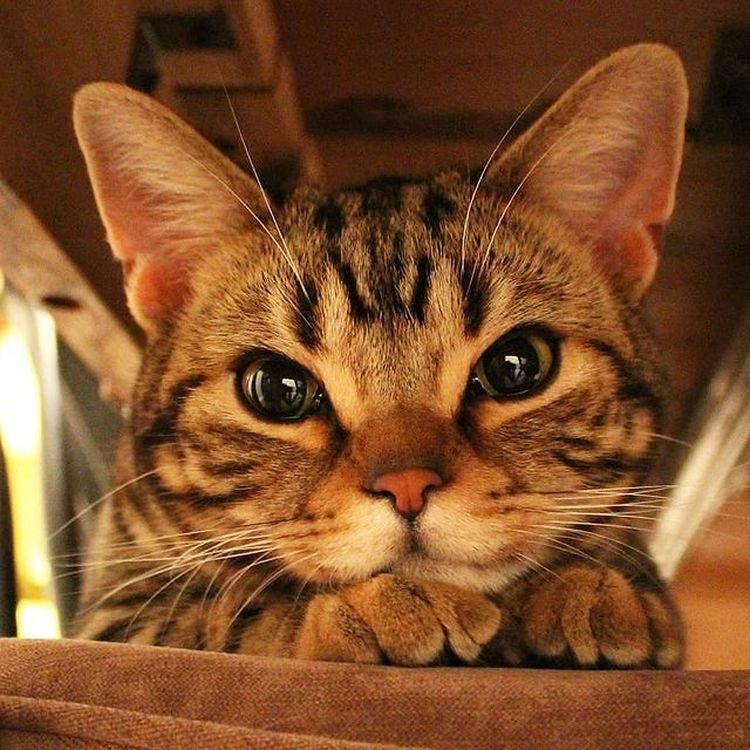 Настолько милые животные, что не улыбнуться, глядя на них, будет преступлением