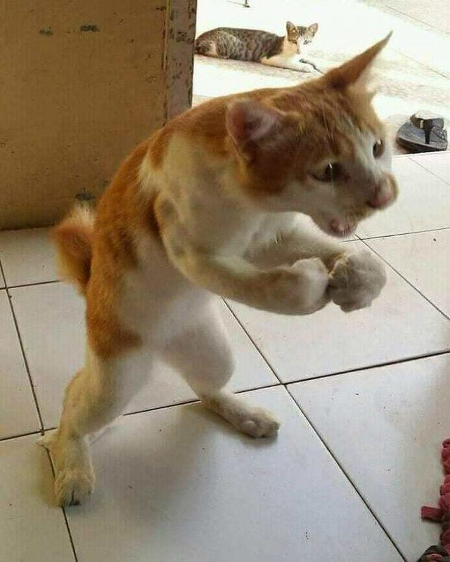 """Кошки, которые """"сломались"""""""