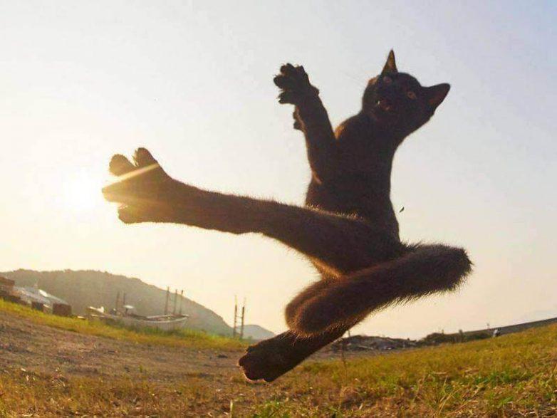 Невероятно эмоциональные котики, которые не стесняют это всем демонстрировать