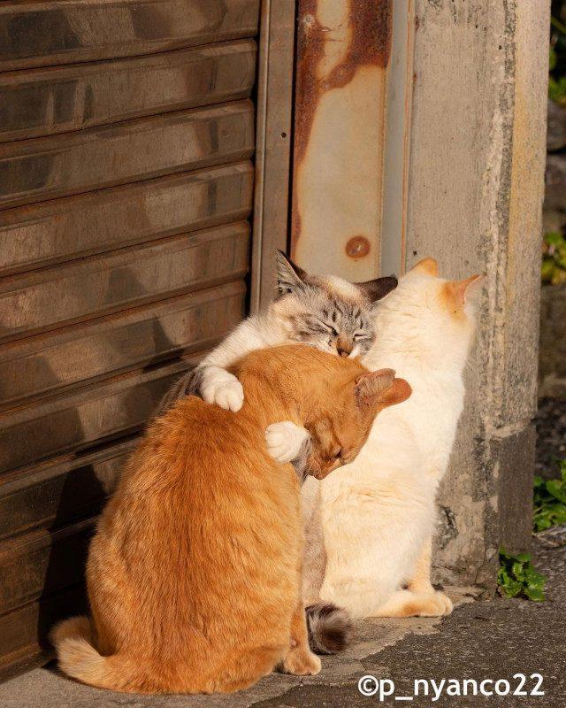 Котиков вам в ленту