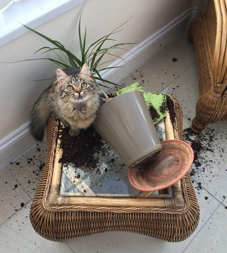Правила жизни котиков, которые объясняют, почему мы обожаем их, несмотря на все их проделки