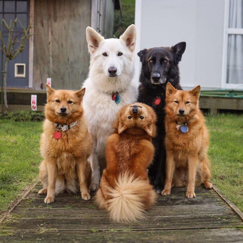 Уморительные псовы, которые поднимут вам настроение
