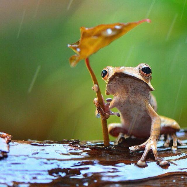 Красочные фотографии лягушек индонезийского фотографа