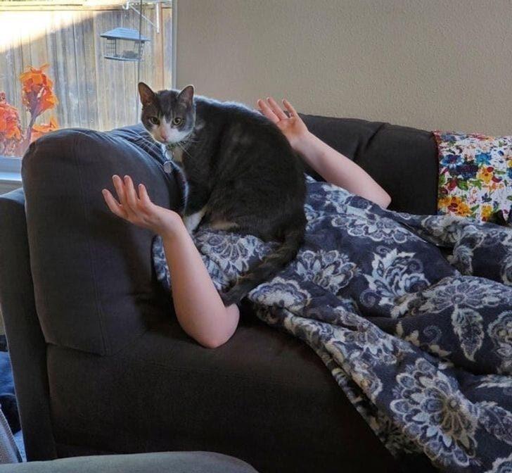 Коты, которые давно дали понять владельцам, кто в доме хозяин