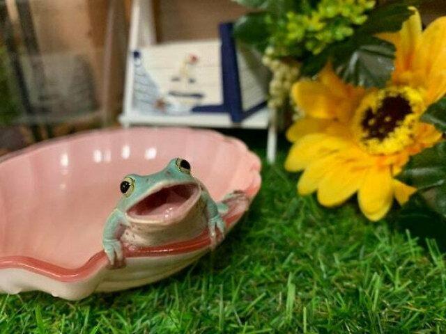 Прикольные фотографии с лягушками для поднятия настроения