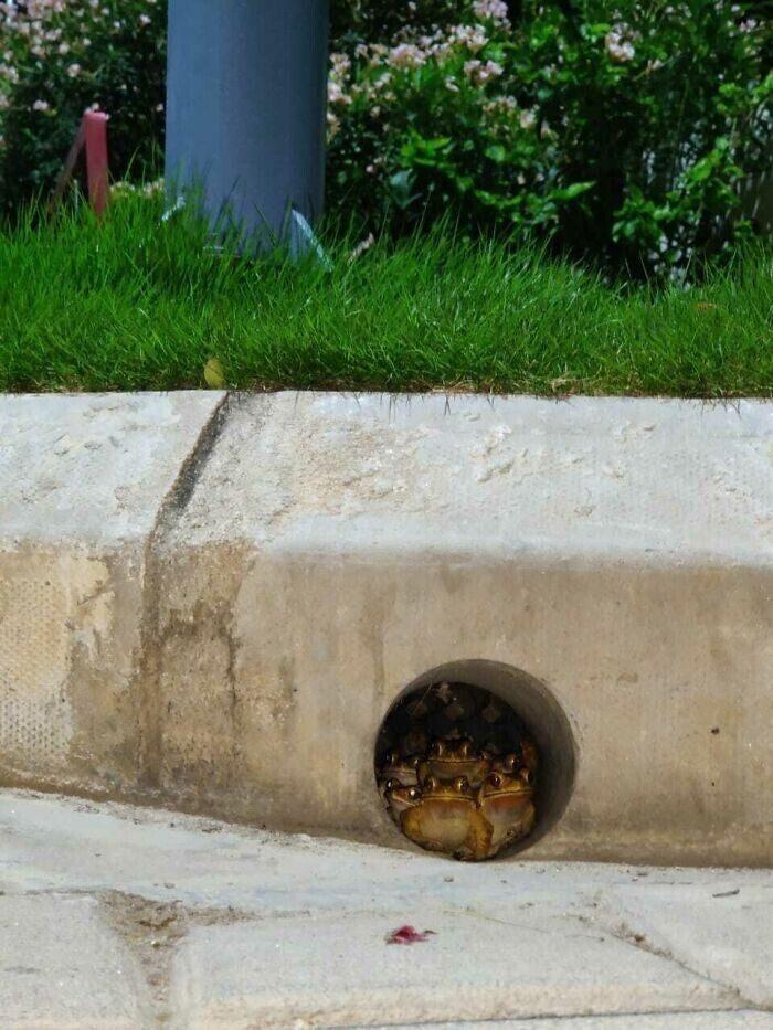 Милые и смешные фото лягушек, которые заставят улыбнуться