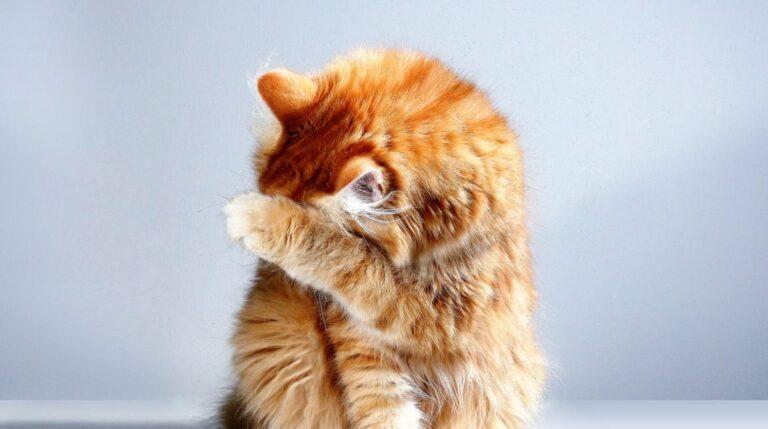 Почему кошку лучше не называть человеческим именем?