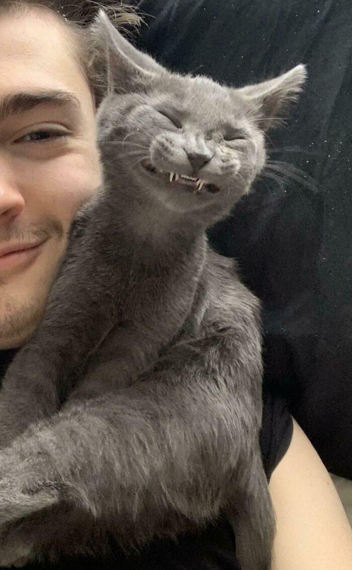Зубастые котики, которым клыки нужны не для устрашения, а для умиления