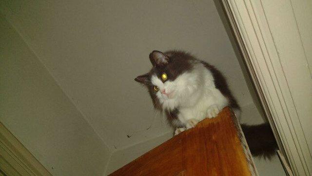 Самые странные и неожиданные места, в которых можно обнаружить кошек