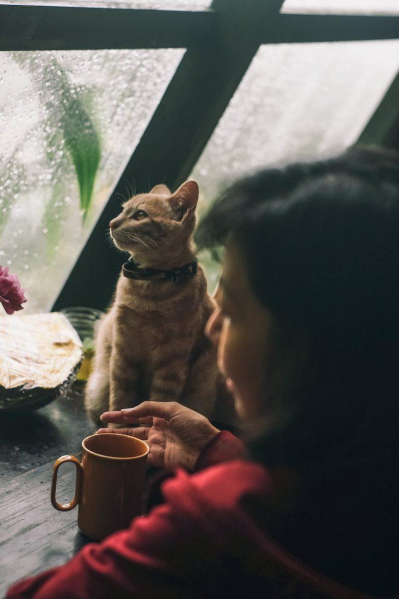 Почему некоторые люди не любят кошек?