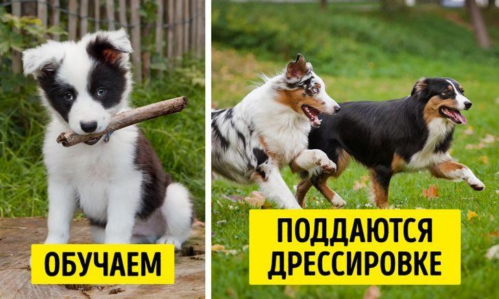 10 заблуждений о домашних животных