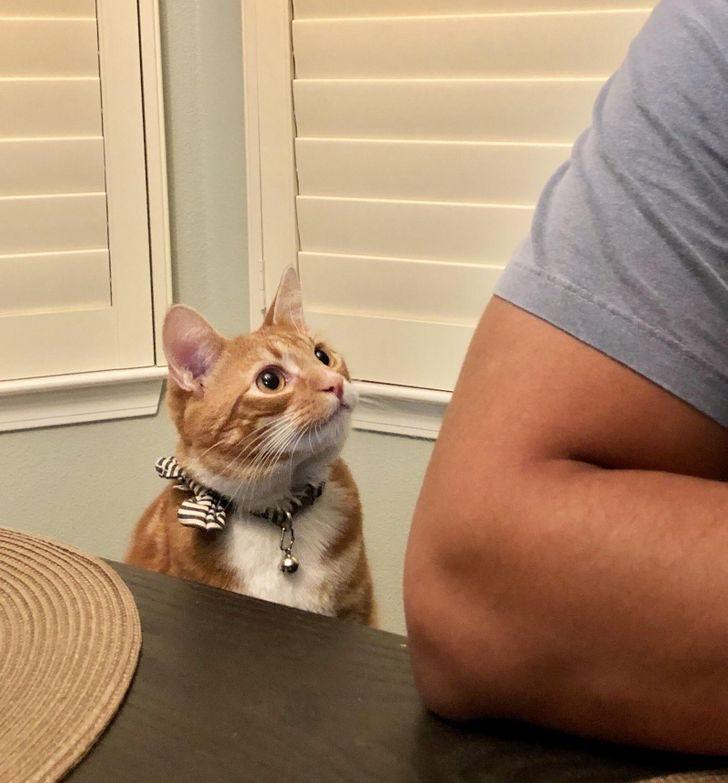 Девушки, которые вынуждены стоять в стороне и смотреть, как кошки уводят их парней
