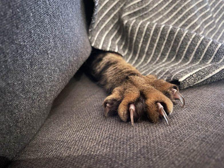 Доказательства, что милые кошачьи коготочки на самом деле опасные когтища
