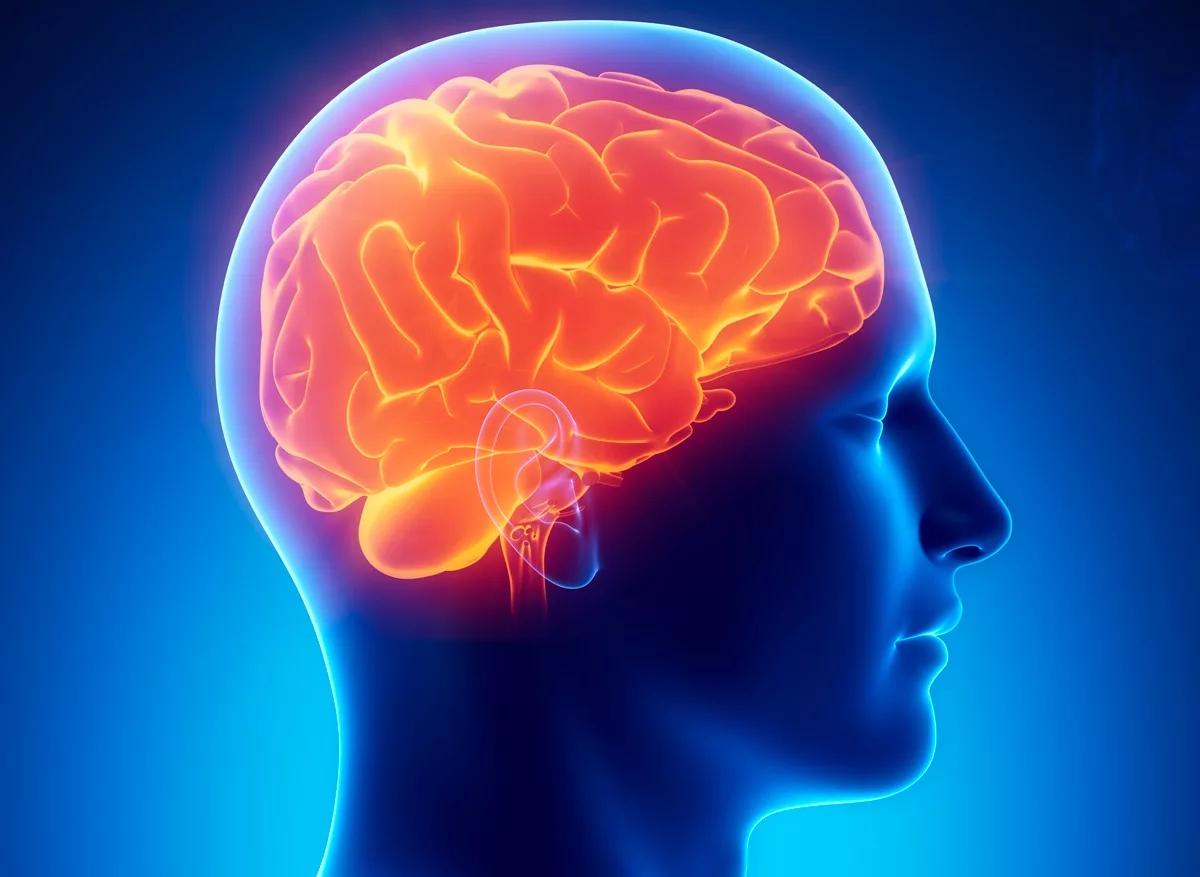 Головной мозг картинки красивые