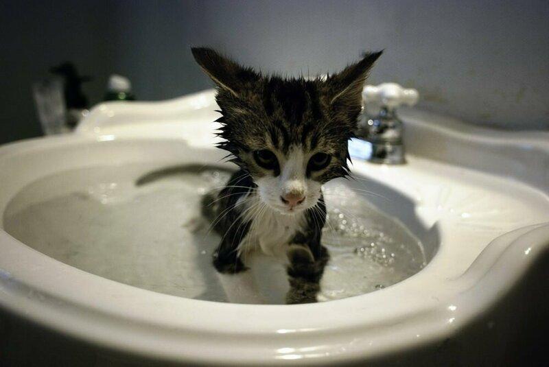 Картинка кот боится воды